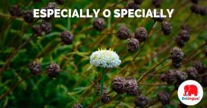 especially o specially - Facebook